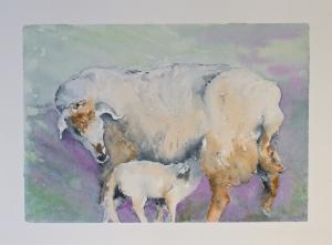 Ewe nursing lamb